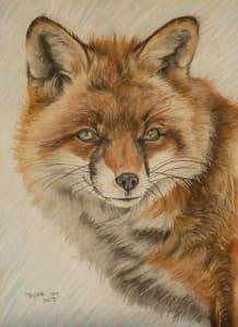 Just a Fox