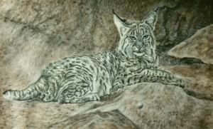 Lounging bobcat 14