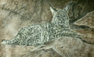 Lounging Bobcat