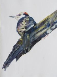 Dekramerkaryn whiteheadedwoodpecker smz7p8