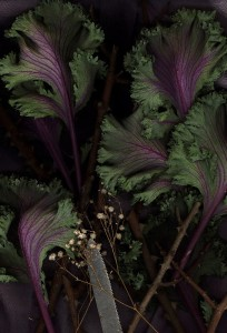 Cabbage, Baby's Breath, Blade