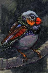 Bird K