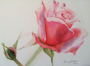 Redoute_rose_study_b0avm3