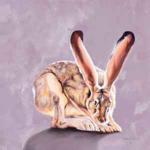 Shyness (black tailed jackrabbit)