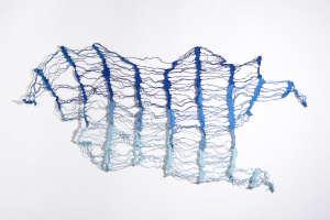 Reticulate Blue