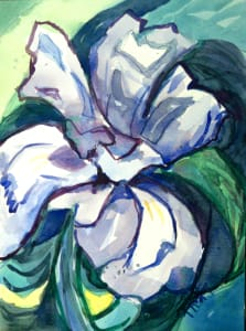 Botanical Garden 66, Dwarf Crested Iris