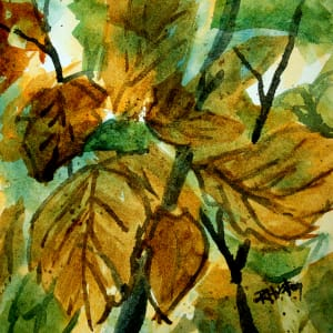 Botanical Garden 57, Autumn Witch Hazel