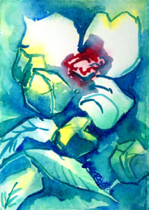 Rose Mallow, (Hibiscus Moscheutos}