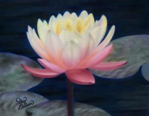 Waterlily Glow