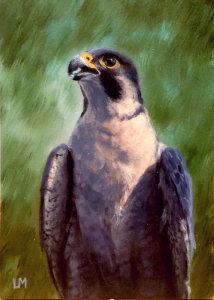 Falcon zq3xuy