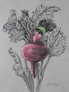 Red Beet