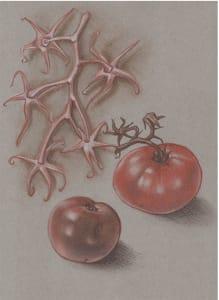 Tomatoes & Vine