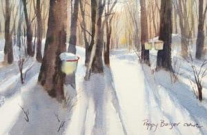Maple Tree Shadows