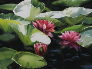 Water Lilies in the Gardens