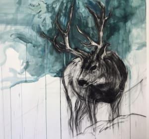 Mule Deer Stag