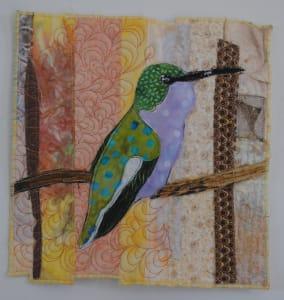 Hummingbird Beauty