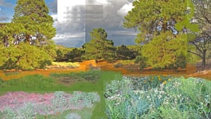 Collage_dru_reed-_landscape_2_cctmya