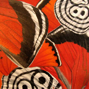 Eighty-Eight Butterfly