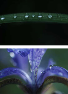 Dew Droplets