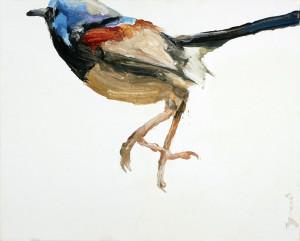 Blue wren orag5k