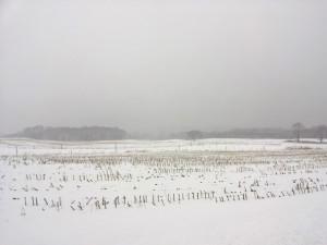 Butts Road Field