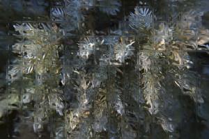 Glass Juniper A