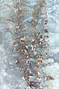 Leaves and Bluestone 1