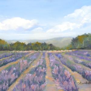 Fields of lavendar ezdez9