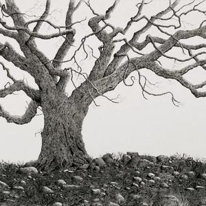 Saint stephen s oak xhxu7y