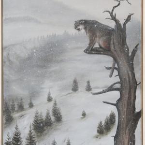 Mountain lion awhuda