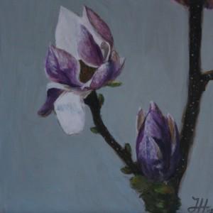 Magnolia print afm5oa