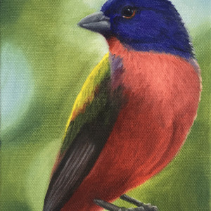 final.painted bunting