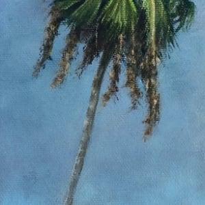 Stormy palm series 2 mhfkgx