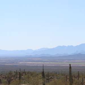 Stacy law desert museum with baboquivari mountain range 2018 cpshnx