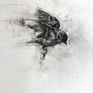 Female House Sparrow in Flight