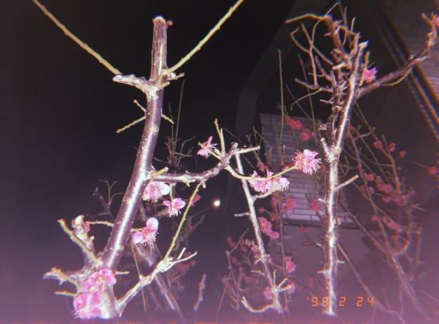 春color人気NO.1☆