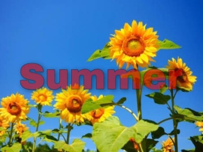 【夏】タイプの芸能人