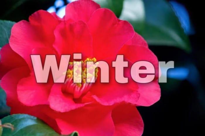 【冬】タイプの芸能人