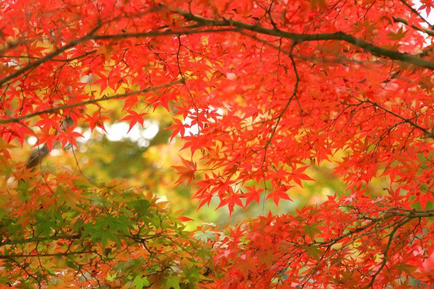 autumn-leaves_00001