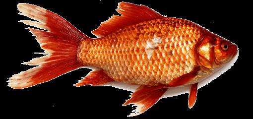 Fischallergie Symptome Und Was Man Dagegen Tun Kann