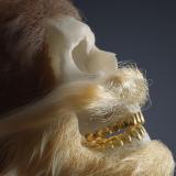 koba profile image
