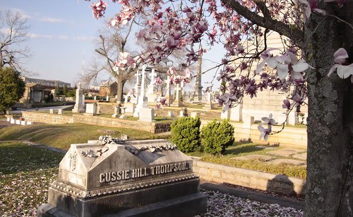 Flowering Tree at Oakland Cemetery Atlanta