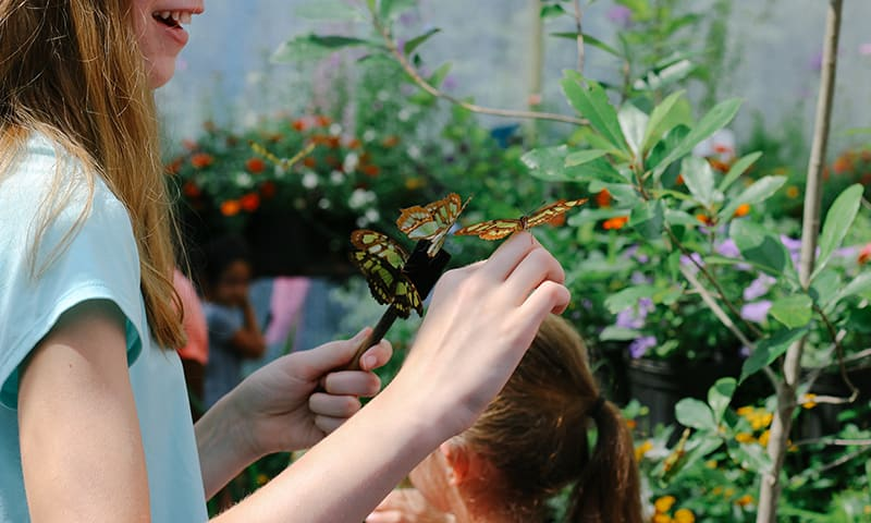 Girl catching a butterfly at the Butterfly Festival at Chattahoochee Nature Center.