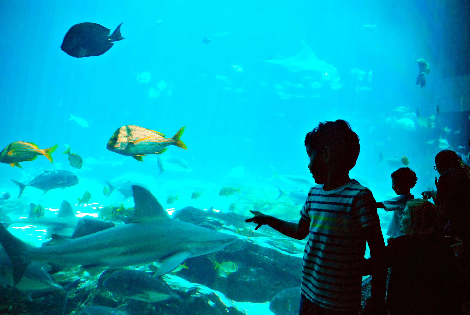 A boy points at a shark through the glass of a water tank at Georgia Aquarium.