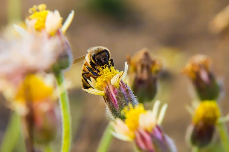 A bee sits on a flower.