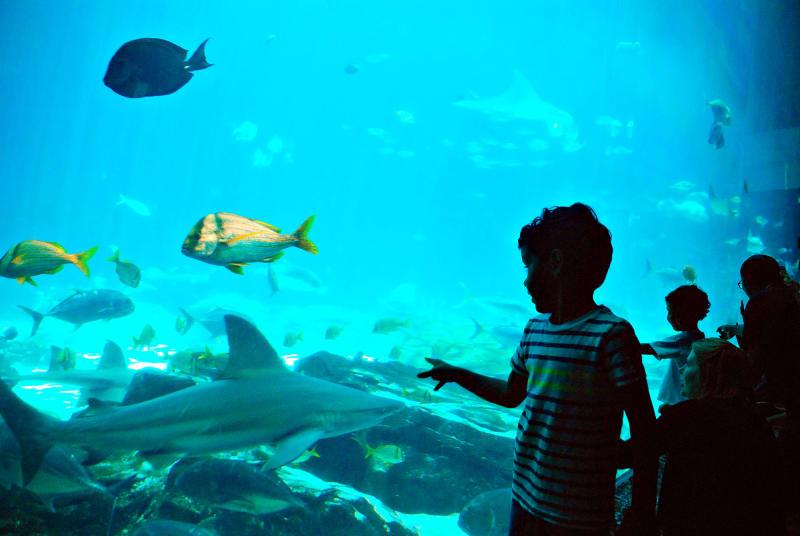 A boy points at a shark through the glass of a water tank at Georgia Aquarium.