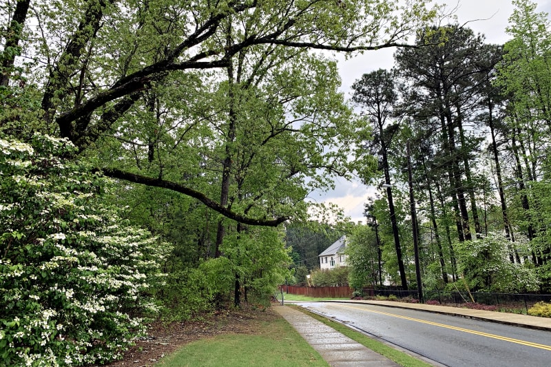 A view of the street from a sidewalk in an Atlanta suburb. The trees and bushes are full and green. The ground is wet from recent rain.