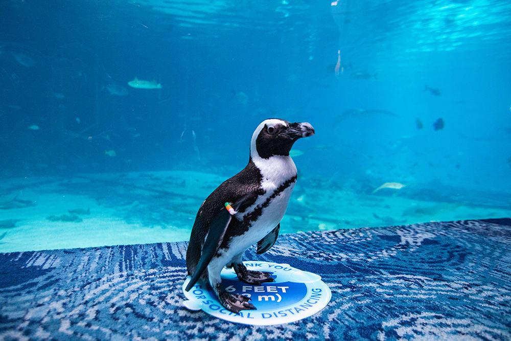Georgia Aquarium - Top Tourist Attractions in Atlanta