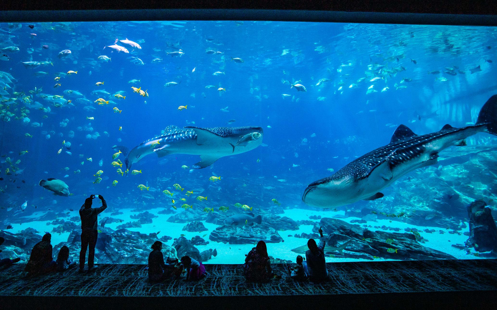 Atlanta Georgia Aquarium