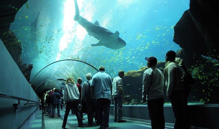 Whaleshark Tunnel at Georgia Aquarium in Atlanta GA